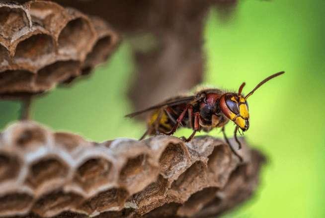 Bienenstich – Was tun? 3 wichtige Schritte