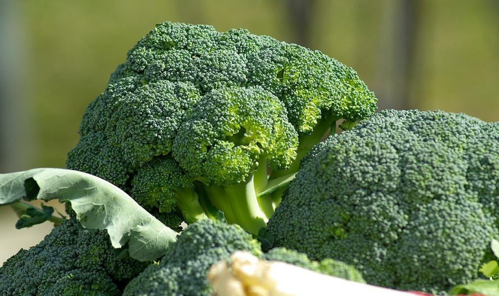 Ist Brokkoli gesund? – Kalorien und gesundheitliche Vorteile