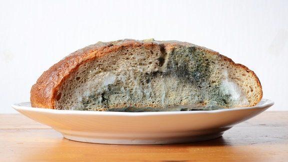 Schimmeliges Brot gegessen? Die Wahrheit über Schimmelpilz