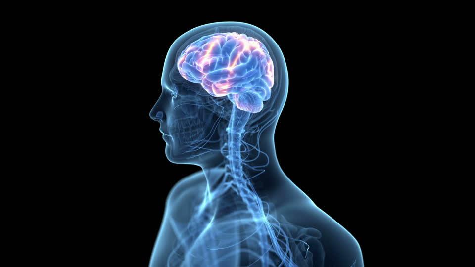 Das menschliche Gehirn – alles rund um das wichtige Organ