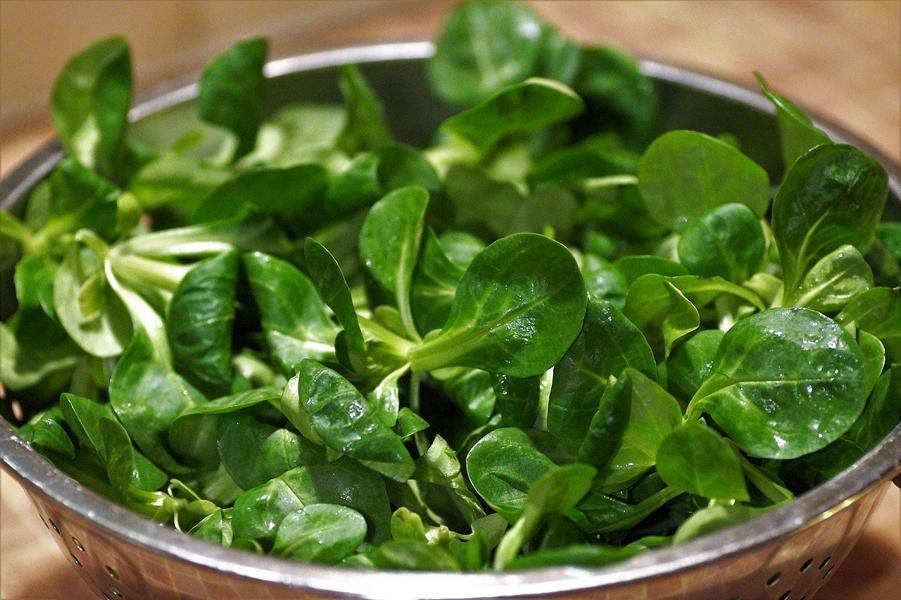 Feldsalat ist gesund – Vitamine, Mineralstoffe und mehr