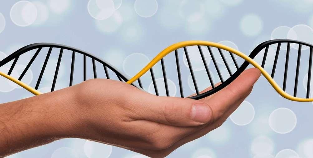 13 intereßante Fakten über DEINE Gene