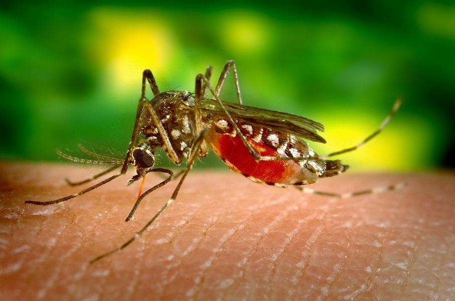 Malaria – Symptome, Komplikationen und sonstige Faktoren