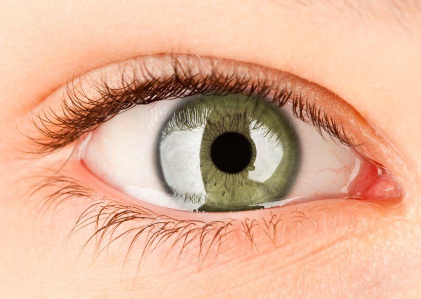 Der Aufbau des Auges – besonders sehenswert!