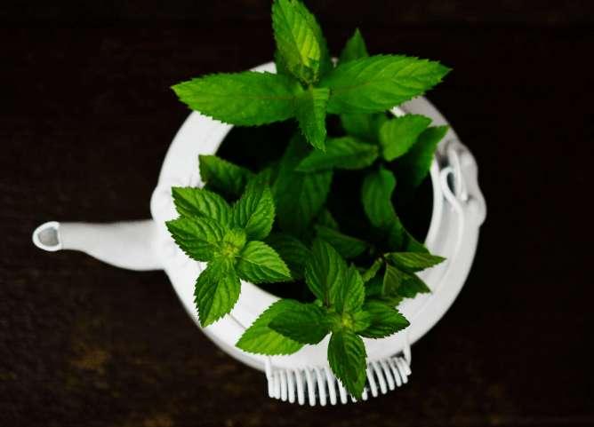 Pfefferminze Vorteile – Bei welchen Symptomen ist sie nützlich?
