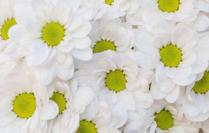 Römische Kamille – Ein tolles Heilmittel!
