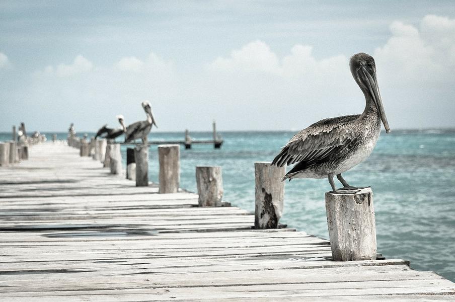 Vogelgrippe Symptome – Was du darüber wißen solltest!