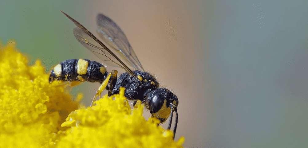 Was tun gegen Wespen? 8 einfache Tipps und Tricks!